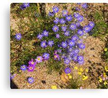 Western Australian Wildflowers, Kings Park, Perth.  Canvas Print