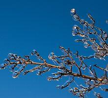 Mother Nature's Christmas Decorations - Shiny Ice Baubles  by Georgia Mizuleva