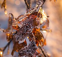 Mother Nature's Christmas Decorations – Golden Oak Leaves Jewels by Georgia Mizuleva