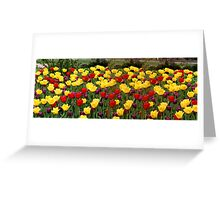 Tulip Extravaganza  Greeting Card