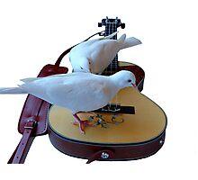 Musical Doves - Ukulele NZ Photographic Print