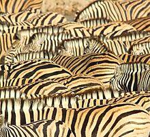 Zebras by markmucke