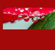 morning dew by Katja Bartz