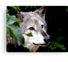 Timber Wolf 1 Canvas Print