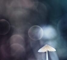 After the Rain... by Bob Daalder