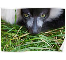 The Grass Is Always Lemur Poster