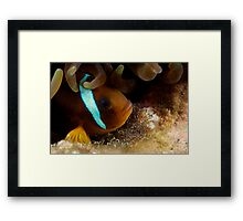 Mother Nemo Framed Print