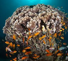 Reef Colors by Aziz T. Saltik