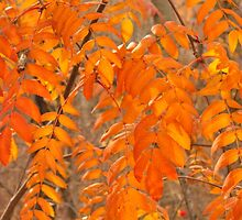 Mountain Ash Leaves in Autumn by Jim Sauchyn