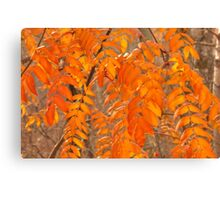 Mountain Ash Leaves in Autumn Canvas Print