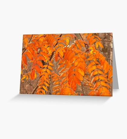 Mountain Ash Leaves in Autumn Greeting Card