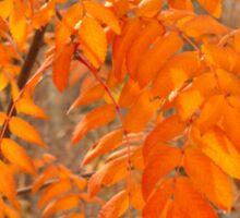 Mountain Ash Leaves in Autumn Sticker