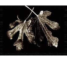 fig leaves Photographic Print