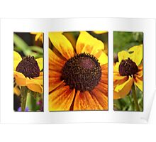 Black-eyed Susan triptych Poster