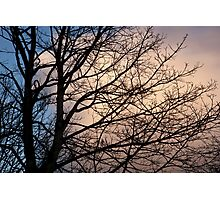 a winter evening Photographic Print