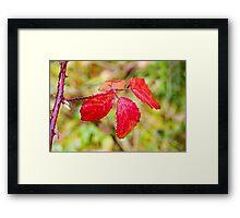 Red Autumn Bramble Leaves Framed Print