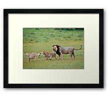male lion teaching his cubs Framed Print