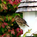 Autumn Visitor by AngieDavies