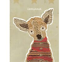the chihuahua  Photographic Print