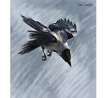 Flying Hooded Crow Photographic Print