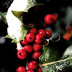 Holiday Holly by Duprel Antwone