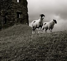 Sheep at Brough Castle, The Lake District by JasonBiggs