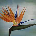 Bird of Paradise by Jan Vinclair