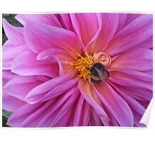 Sampling the Nectar Poster