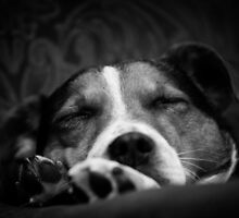 It's a dog's life by GinnyScholes