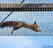 Scampering Squirrels by Susie Peek