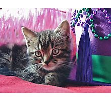 Kitty Daydream Photographic Print