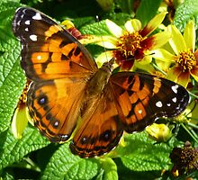 American Painted Lady Butterfly by WildestArt