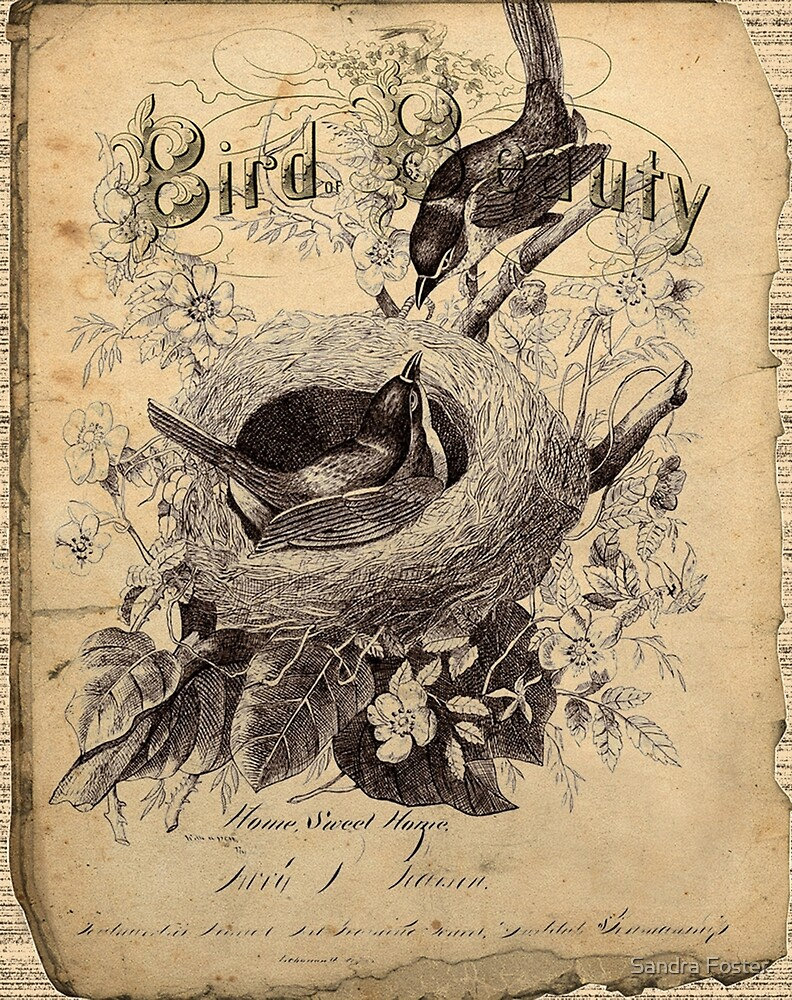 Bird Of Beauty  by Sandra Foster