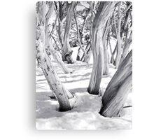Snow Gums Canvas Print