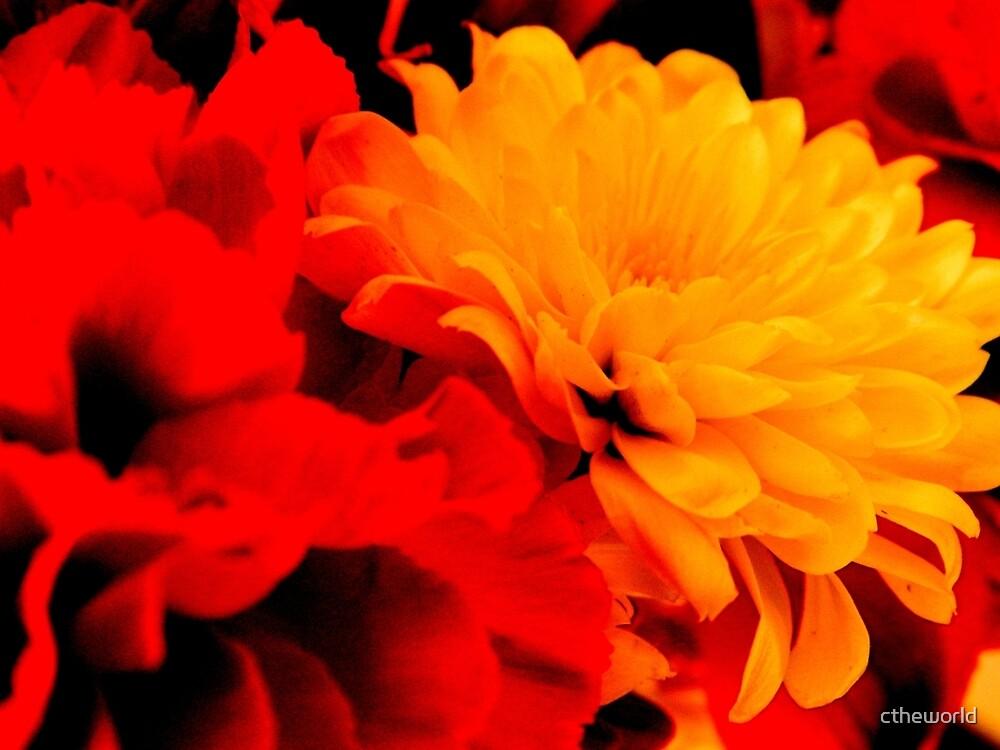 Fiery Flowers   - 2  ^ by ctheworld