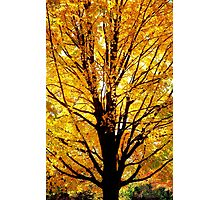 Golden Autumn  Photographic Print