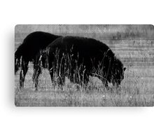 Sheep in a Field Canvas Print