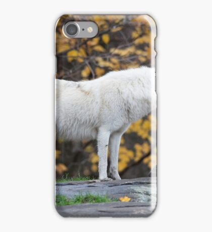 Arctic Wolf - Parc Omega, Quebec iPhone Case/Skin
