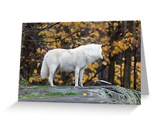 Arctic Wolf - Parc Omega, Quebec Greeting Card