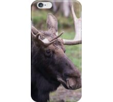 Large moose in a forest iPhone Case/Skin
