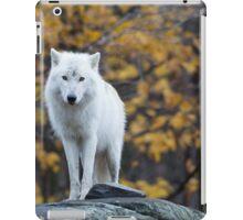Arctic Wolf - Parc Omega, Quebec iPad Case/Skin