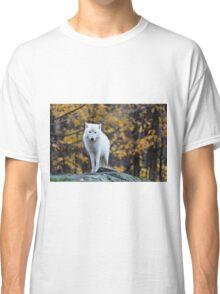 Arctic Wolf - Parc Omega, Quebec Classic T-Shirt