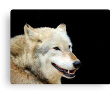 Timber Wolf 2 Canvas Print