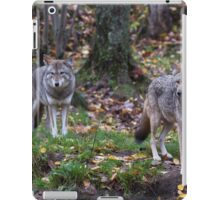 Pair of coyotes in a forest iPad Case/Skin