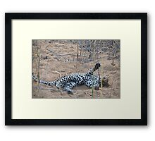 Leopard cub playing with reeds Framed Print