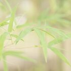 Bamboo by the-novice