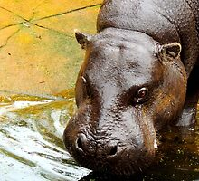Female Pygmy Hippo by Barnbk02
