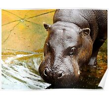 Female Pygmy Hippo Poster