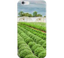 Sunshine Nursery's Chrysanthemum Field iPhone Case/Skin
