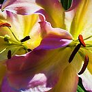 Two Lilies by Jessica Manelis